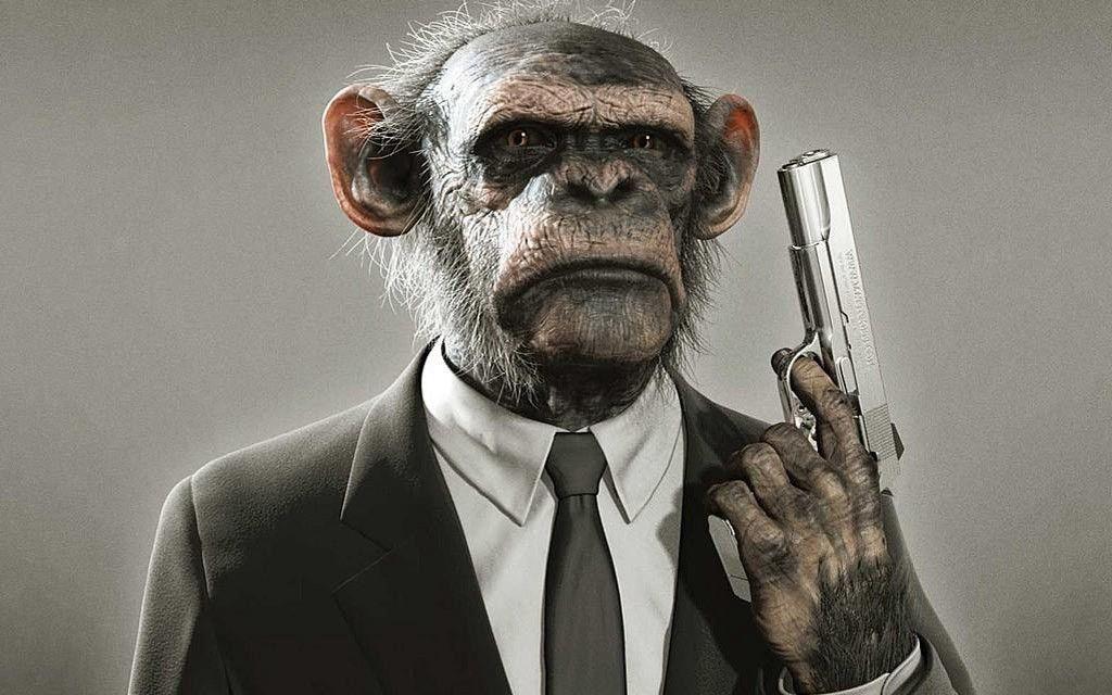 Monkey Photos and Gun