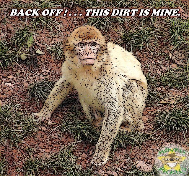 Meme - monkey miner